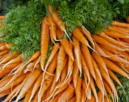 CSA Organic Carrots